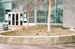 The Garden Plot at the Julia de Burgos Middle School Before Planting Began